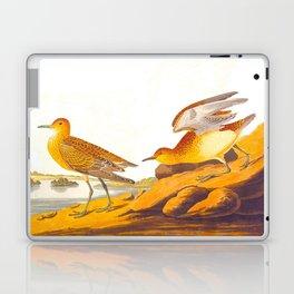 Buff-breasted Sandpiper Bird Laptop & iPad Skin