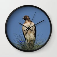snatch Wall Clocks featuring Red-Tailed Hawk on Watch at Foothill and B Street by Ralph S. Carlson