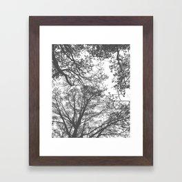 Grey Trees Abstract Framed Art Print