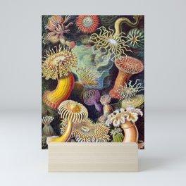 Anemones by Haeckel (Sea Plants and Flowers) Mini Art Print