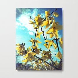 Forsythia Flowers Metal Print