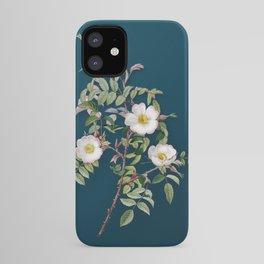 Vintage Blooming Reddish Rosebush Botanical Illustration on Teal iPhone Case