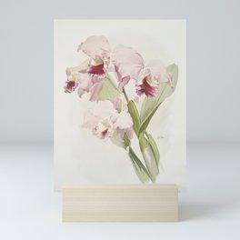 Cattleya labiata from Reichenbachia Orchids (1888-1894) illustrated by Frederick Sander (1847-1920) Mini Art Print