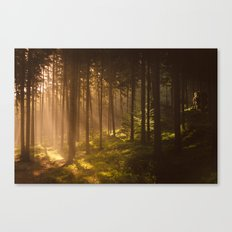 Morning forest Canvas Print