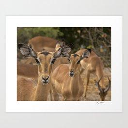 CW-001-Gazelle Art Print