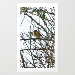 The Solitary Robin Art Print