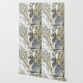 Animal ArtStudio 219 Cat Wallpaper