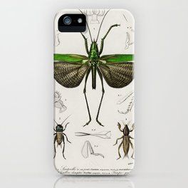 Grasshopper of six points (Locusta sexpunctata) illustrated by Charles Dessalines D' Orbigny (1806-1 iPhone Case