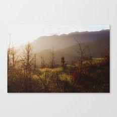 Wilding Pine Canvas Print