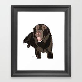 Chocolate Lab Framed Art Print