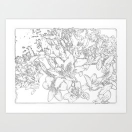 Large flowers pencil effect Art Print