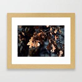 Winter oak leaves Framed Art Print