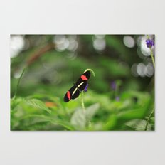 Showing Off Canvas Print