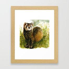 European Polecat Framed Art Print