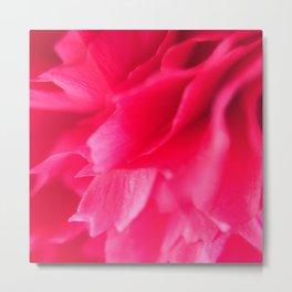 Pink Carnation 2 Metal Print