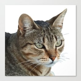 Stunning Tabby Cat Close Up Portrait Isolated Canvas Print