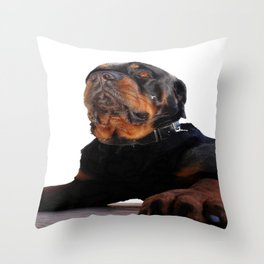 Regal and Proud Male Rottweiler Portrait Isolated Throw Pillow