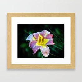 Lavender And Yellow Lily Framed Art Print
