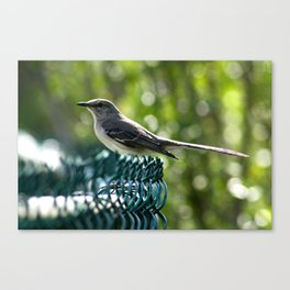 Bird Perched  Canvas Print