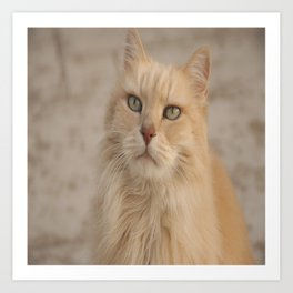 Whiskers in Color Art Print