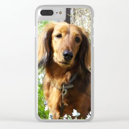 Dachshund with spring flowers by poppyshome Clear iPhone Case