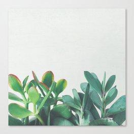 Crassula Group Canvas Print