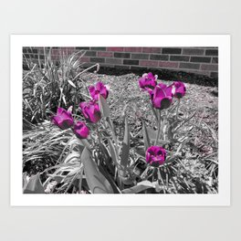 Purple Blooms Art Print