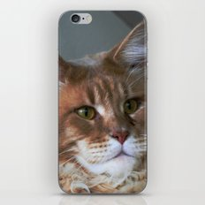 Orange cat with yellow eyes iPhone & iPod Skin