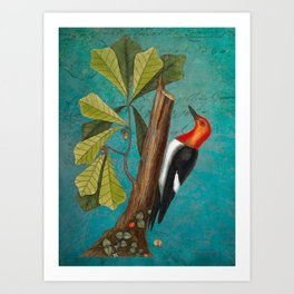 Red Headed Woodpecker with Oak, Natural History and Botanical collage Art Print