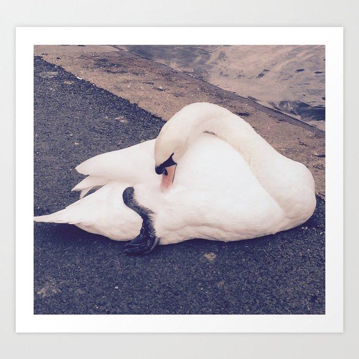 The Swan pt.2 Art Print