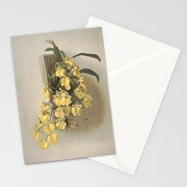 Vintage Orchid Print - Reichenbachia (1888) - Oncidium concolor Stationery Cards