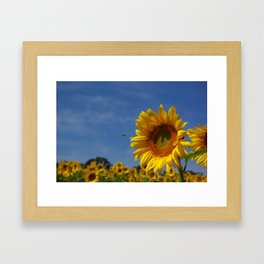 Sunny Summer Sunflower Framed Art Print