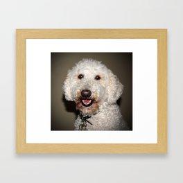 Jake The Labradoodle Framed Art Print