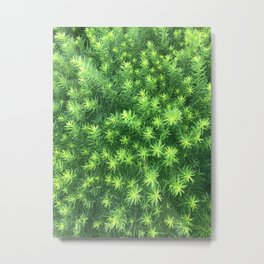 Nature for Days Metal Print
