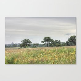 Dream in the park Canvas Print