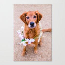 Goldie Locks, Golden Retriever with Flower Crown Canvas Print
