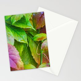 Virginia Creeper Leaves Stationery Cards