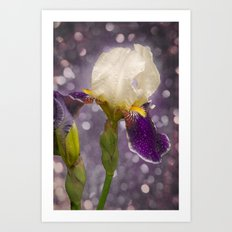 Rain drops Iris Art Print