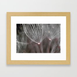 Salsify seeds Framed Art Print