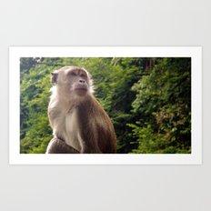 Pensive Primate Art Print