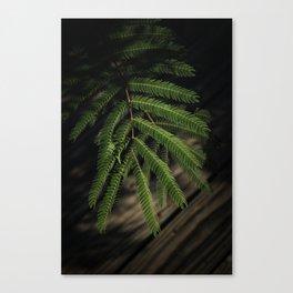 The Fern Canvas Print