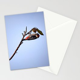Woodpecker and nut. Stationery Cards
