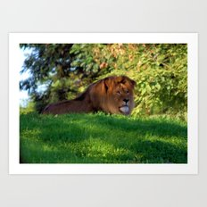 King of the Jungle - Lion deep in thought Art Print