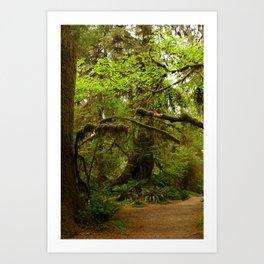 The Opulence Of The Rainforest Art Print
