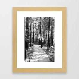 Path Through the Trees Framed Art Print