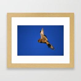 FLIGHT OF THE KESTREL Framed Art Print