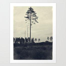 Pine tree 4 Art Print
