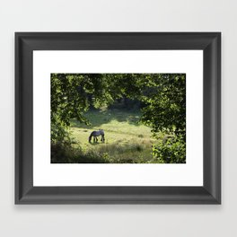Horse in Meadow Framed Art Print