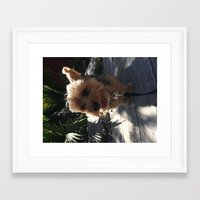 calvin Framed Art Prints featuring Calvin by pchungster116
