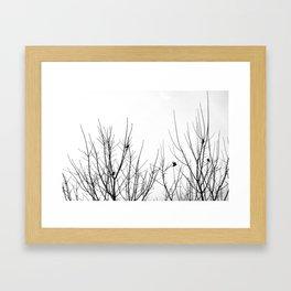 Birds on Branches Framed Art Print